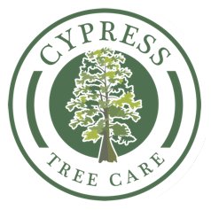Cypress Tree Care