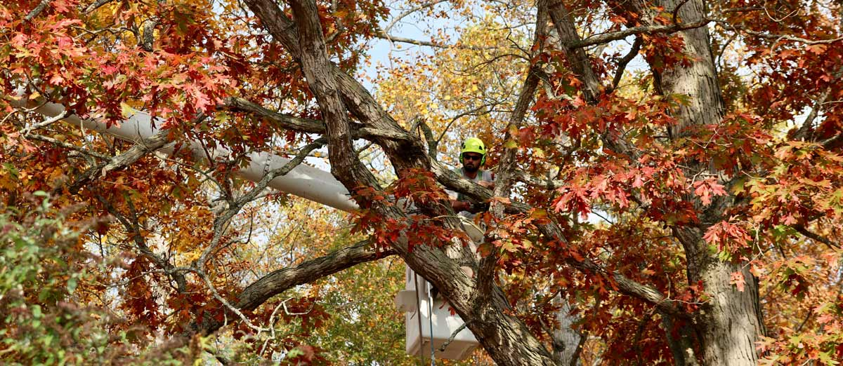 Tree Care Services Overview