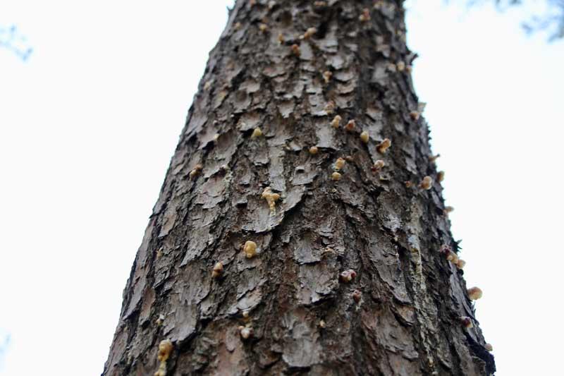 Pests on Tree