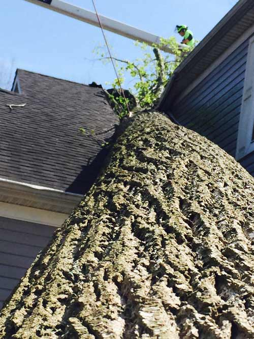 Cypress Tree Care - Storm Damage