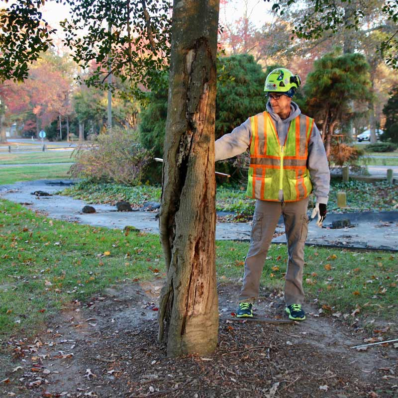 Working with an Arborist